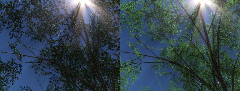 TreeLeaves.jpg